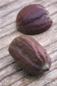 seeds of jojoba (Simmondsia chinensis). with it is produced a oil used in cosmetics and other industries